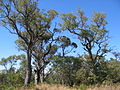 Hamersley tower reserve 5.jpg