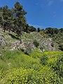 Harei Yehuda, Israel - panoramio (1).jpg