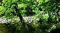 Havel (Moosbeck) 19-07-2011 696.jpg