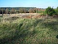 Heathland, Cannock Chase - geograph.org.uk - 277582.jpg