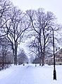 Helsingborg 2010-11-27 (5393102549).jpg
