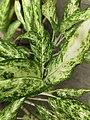 Herby green.jpg