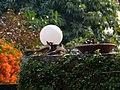 Himalayan Bulbul - Pycnonotus leucogenys - P1030365.jpg