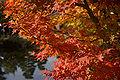 Himeji Koukoen33n4592.jpg