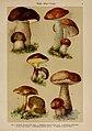 Hoffmann-Dennert botanischer Bilderatlas (Taf. 04) (6424981407).jpg