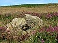 Holed stone, Kenidjack Common - geograph.org.uk - 526044.jpg