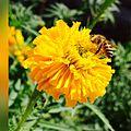 Home flower.jpg