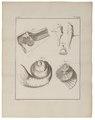 Homo sapiens - binnenoor - 1700-1880 - Print - Iconographia Zoologica - Special Collections University of Amsterdam - UBA01 IZ19600069.tif