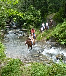 Horse Riding Tours In Wales