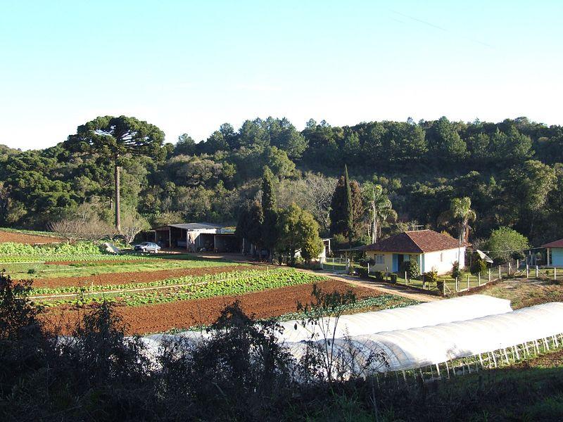 Ficheiro:Horticulture in Almirante Tamandaré countryside.JPG