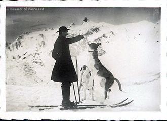St. Bernard (dog) - St. Bernard in use as an avalanche dog (1929)