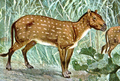 Hyracotherium Eohippus hharder cropped.png