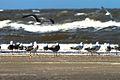 IJmuiden-beach-2013-22 (9043403325).jpg