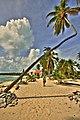 I Change my Mind - Bent Tree in Belize.jpg