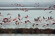 I fenicotteri rosa prendono il volo - panoramio