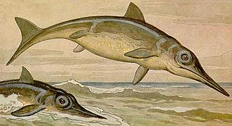 Hettangian - Ichthyosaurus
