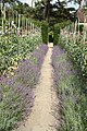Ightham Mote gardens - geograph.org.uk - 1595709.jpg
