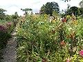 Il giardino della casa di Monet - panoramio.jpg