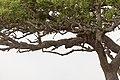 Impressions of Serengeti (34).jpg