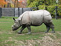 Indian rhinoceros Toronto Zoo.jpg