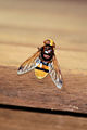 Insekt 16 08 14.jpg