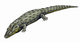 <i>Intasuchus</i> species of amphibian (fossil)