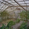 Interieur van de oude vrijstaande kas met gaashekken en begroeiing - Beesd - 20404855 - RCE.jpg