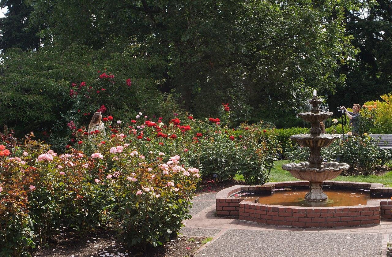 Original file 1 600 1 050 pixels file size 815 kb - International rose test garden portland ...