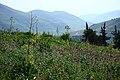 Ira ^ Yargha Sub-District, Jordan - panoramio (6).jpg