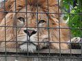 Ishikawa Zoo - Animals - 34 - 2016-04-22.jpg