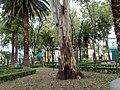 Iztaccihuatl Park - panoramio.jpg