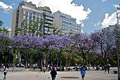 Ĵakarandoj en florado en Plaza Miserere, Bonaero dum Spring