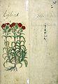 Japanese Herbal, 17th century Wellcome L0030098.jpg