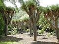 Jardín canario 16.JPG