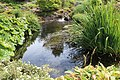 Jardin Botanique Royal Édimbourg 32.jpg