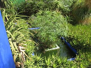 Giardini majorelle wikipedia for Moderne waterpartijen tuin