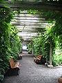 Jardin botanique de Montréal1.jpg