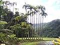 Jardin de Balata 3.JPG