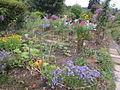 Jardin potager 002.JPG