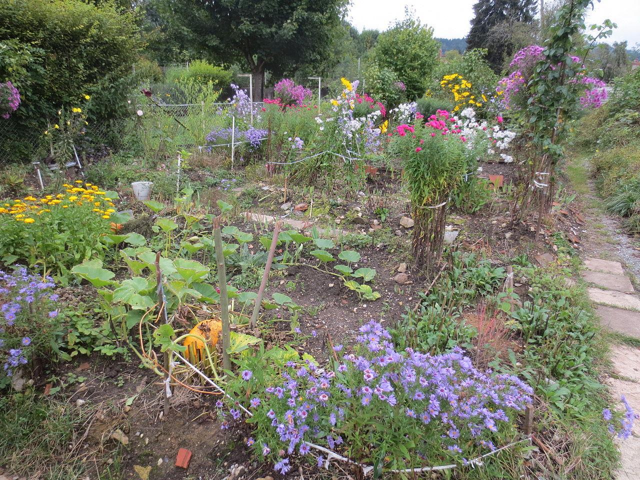 serre de jardin design