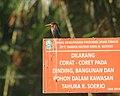 Javan Kingfisher.jpg