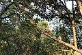 Jim Corbett Forest 3.jpg