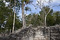 Jungle covered ruin Coba 5 (4373728199).jpg