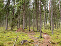 Jyväskylä - trail in Halssila.jpg