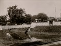 KITLV - 82473 - Lambert & Co., G.R. - Singapore - Entrance at the Kraton at Kotaraja (Kota Banda Aceh) - circa 1880.tif