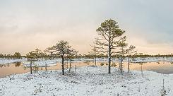 Kakerdaja raba talvine maastik.jpg