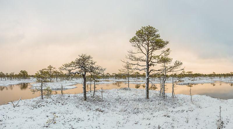 File:Kakerdaja raba talvine maastik.jpg