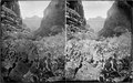 Kanab Canyon. Near Grand Canyon, Grand Canyon National Park. Old nos. 457, 484, 618. Good view of - NARA - 517876.tif