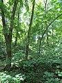 Kaniv Nature Reserve (May 2018) 05.jpg