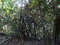 Karnala Bird Sanctuary (2978625272).jpg